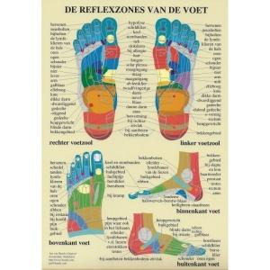 Poster Anatomie